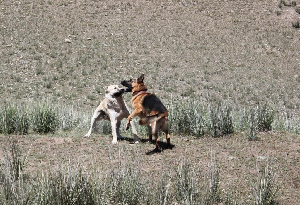 Собачьи игры