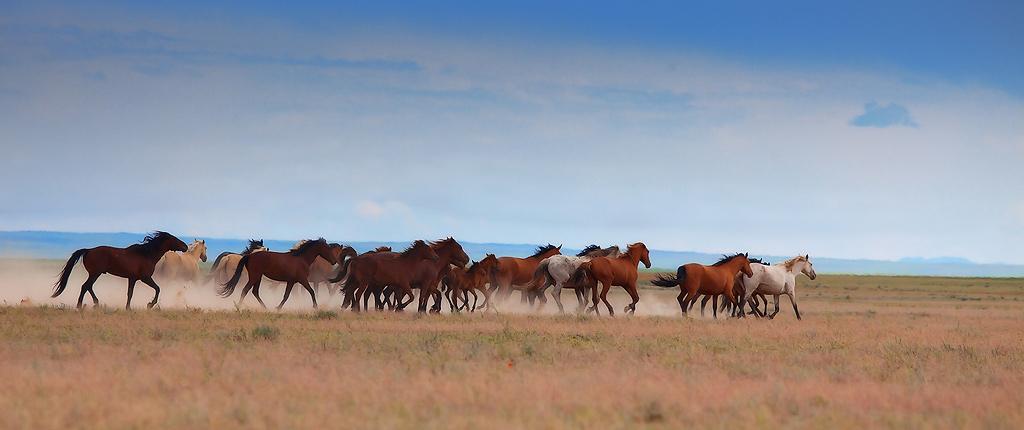 Лошади