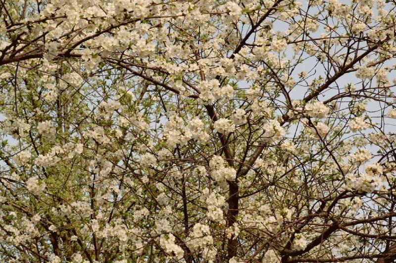 Деревья уже цветут